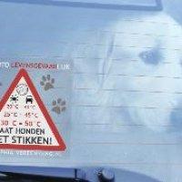 Geen hond in snikhete auto