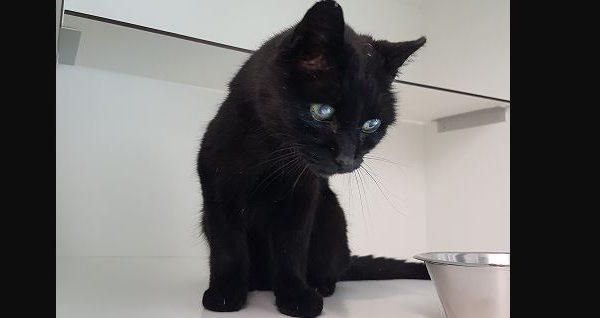 Zwarte kat gevonden in Cromvliet