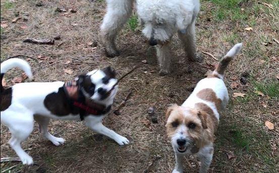Hondenpoep In Tuin : Hondeneigenaren staan te gluren in onze tuinen rijswijk tv